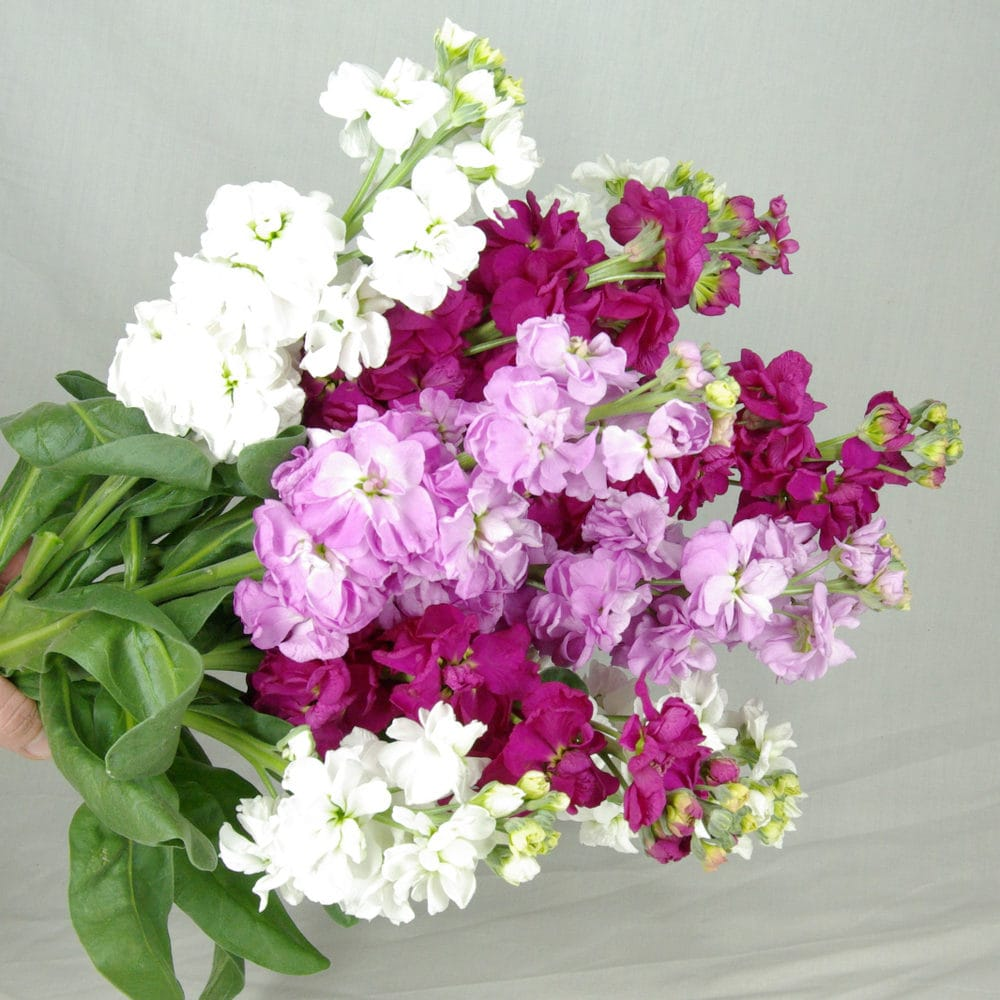 Stock Flowers Bunch